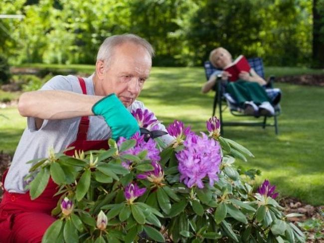 фото садовника